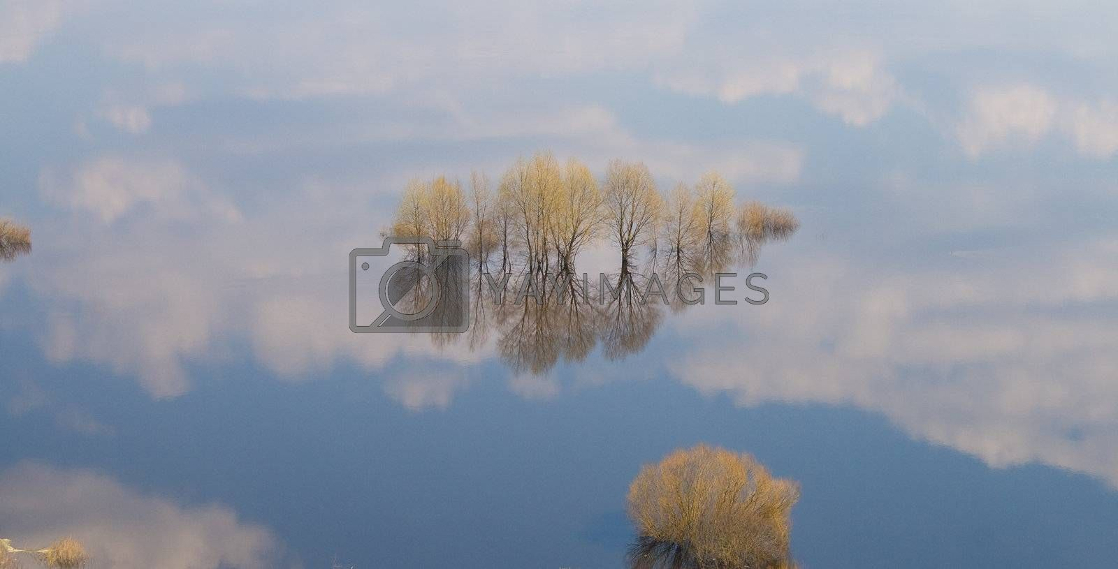 many trees in water-meadow, view from above