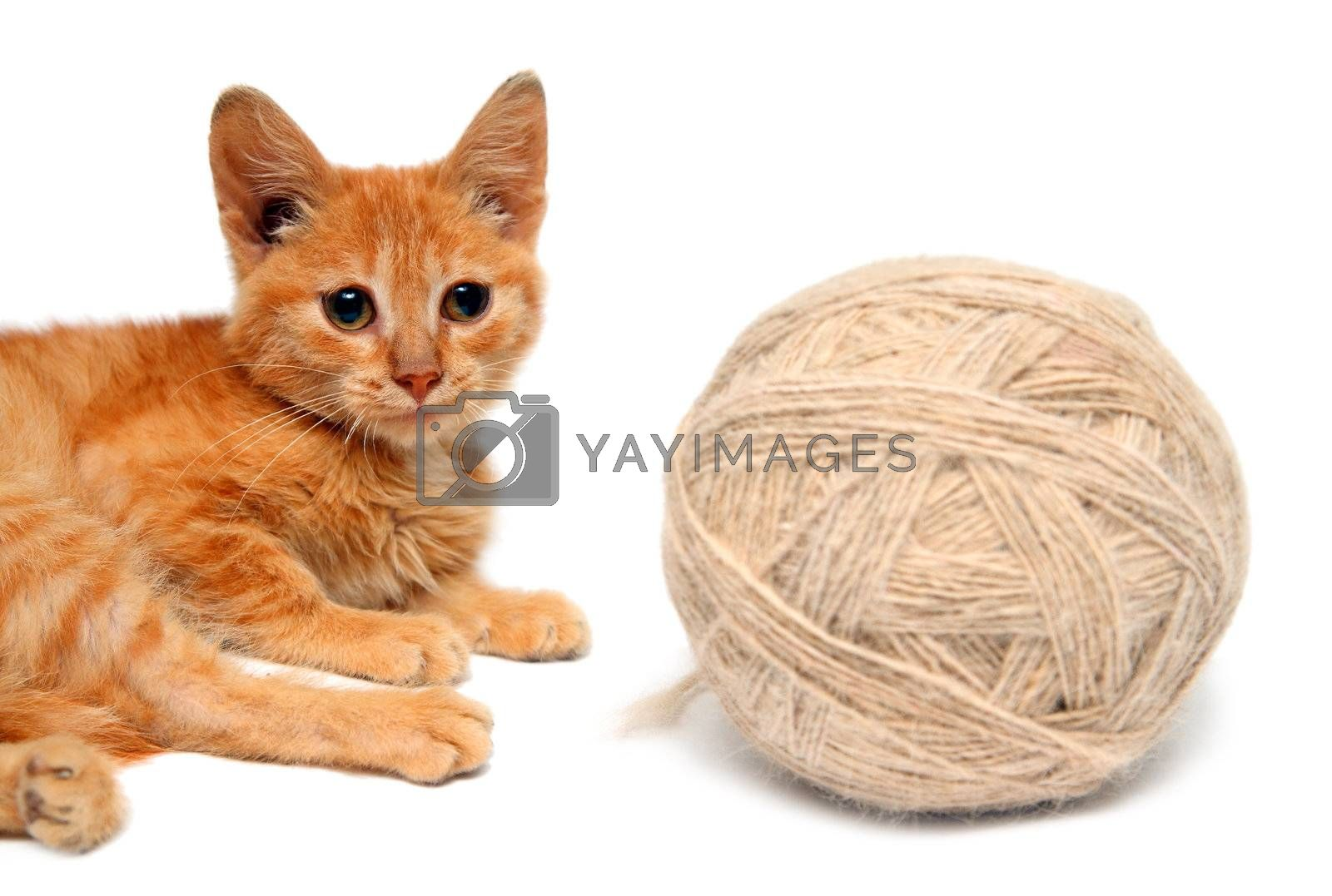 red small cat and big clew of wool isolated on white