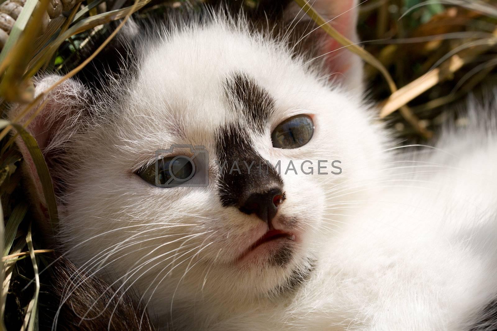 close-up kitten head