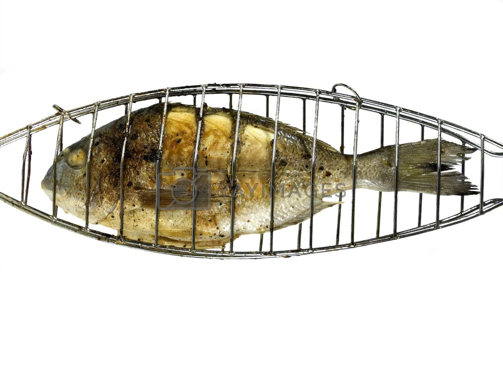 Grilled porgy on white background