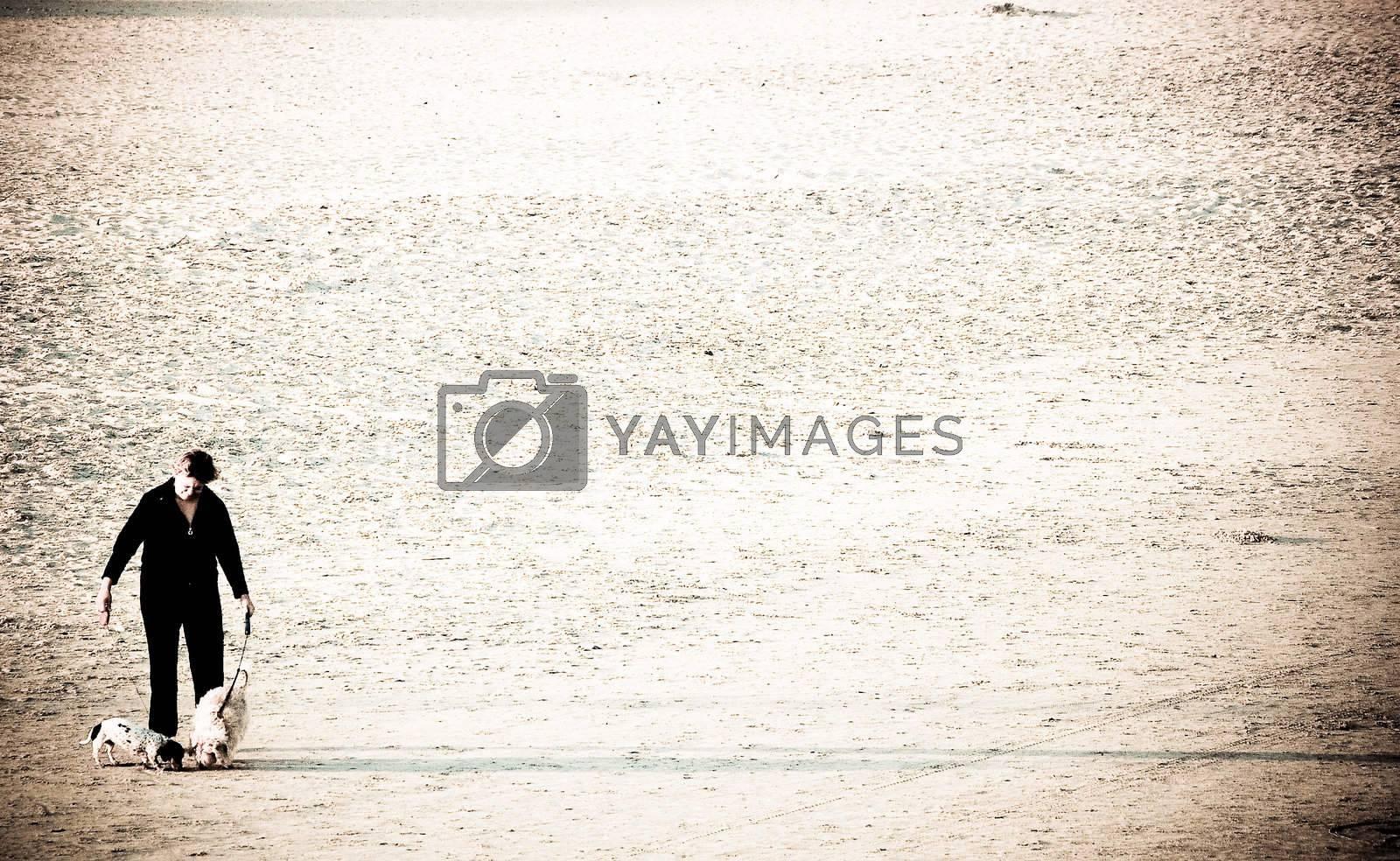 Dog Walking Left by RefocusPhoto