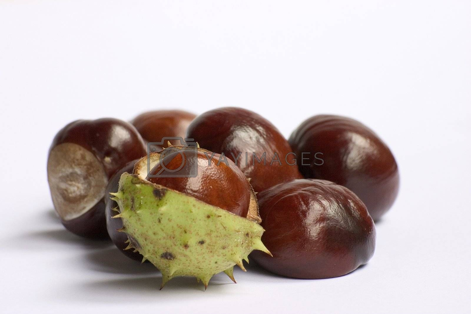 Bunch of chestnuts isolated on a white background.