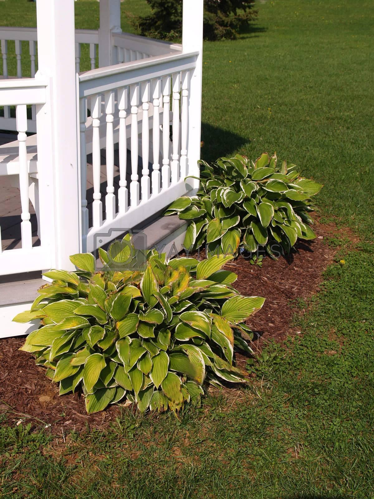 two green hosta plants by a white gazebo railing
