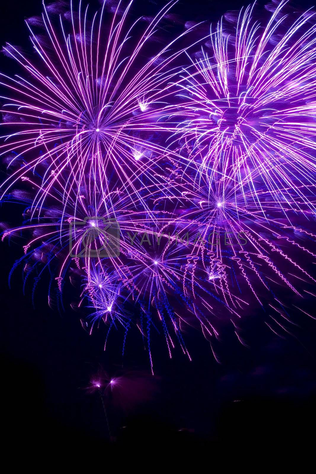 Purple fireworks in a dark sky