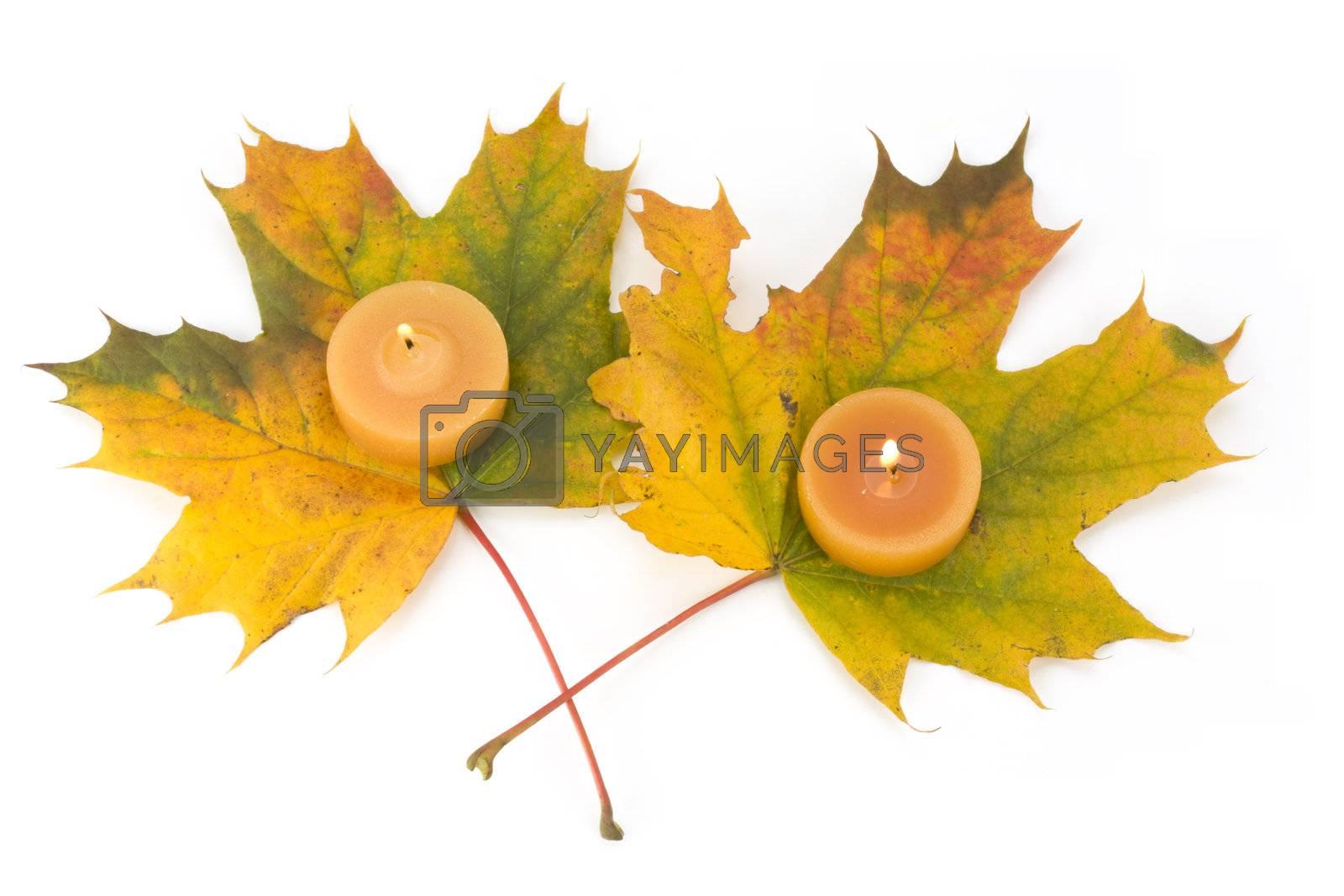 autumn maple leaves and tea lights
