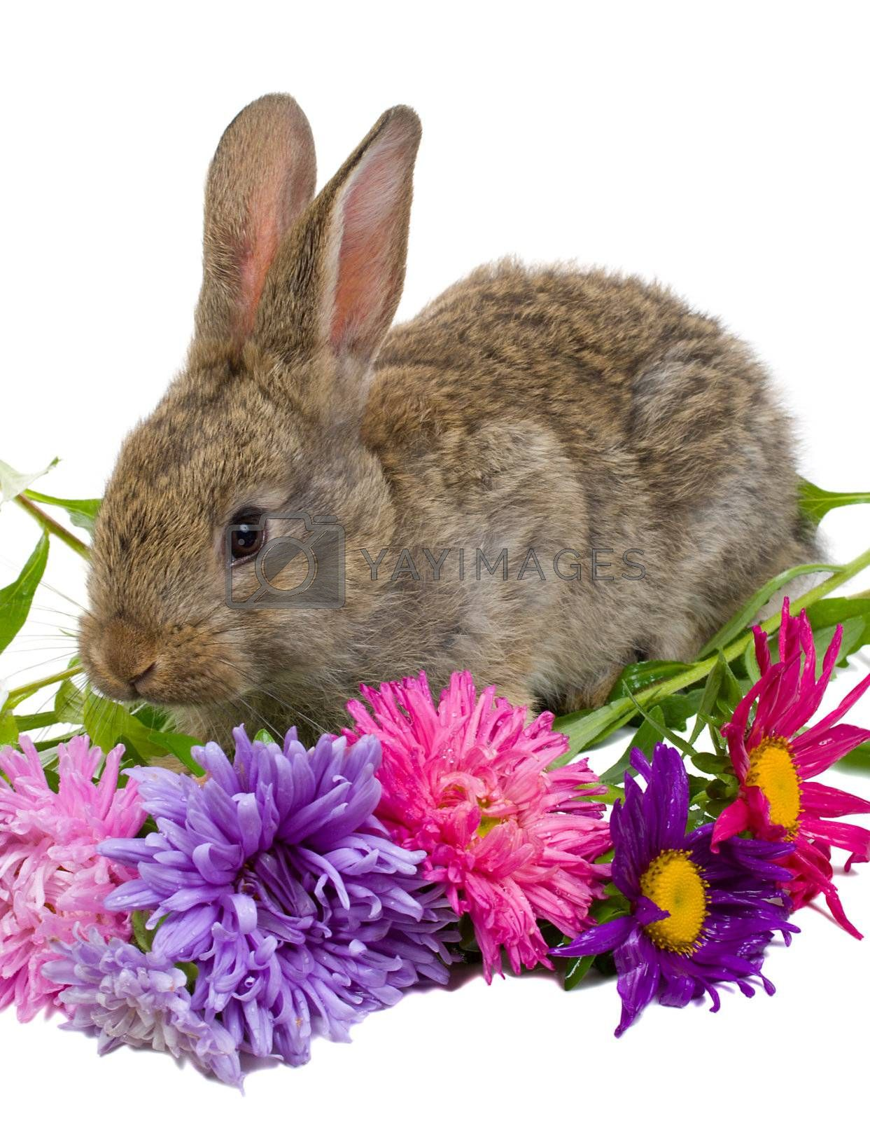close-up bunny with flowers, isolated on white