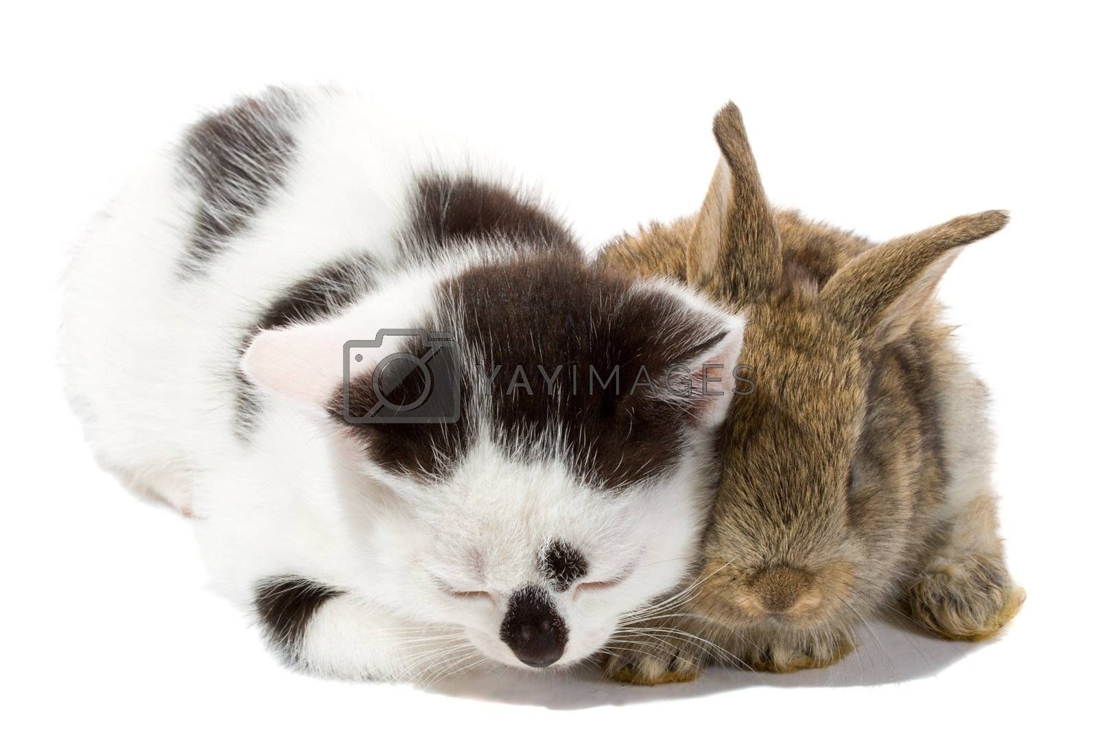 close-up kitten and bunny, isolated on white