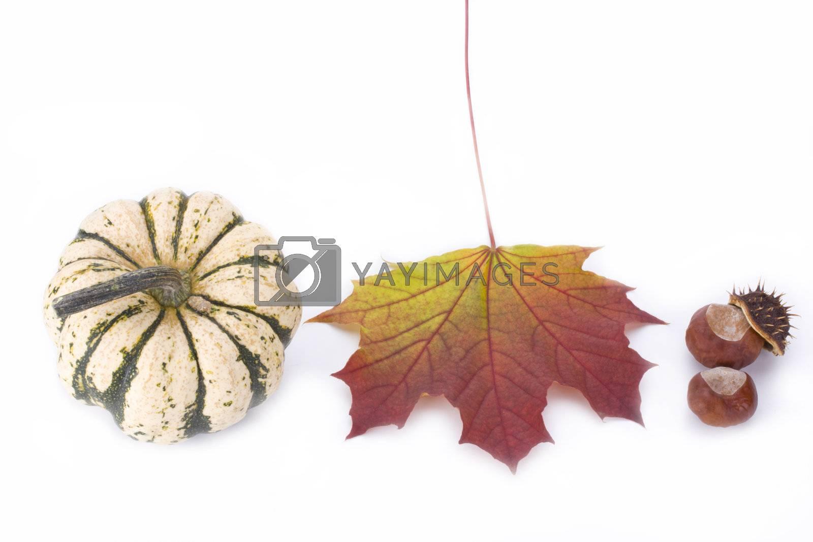 pumpkin, maple leaf and chestnut on white background