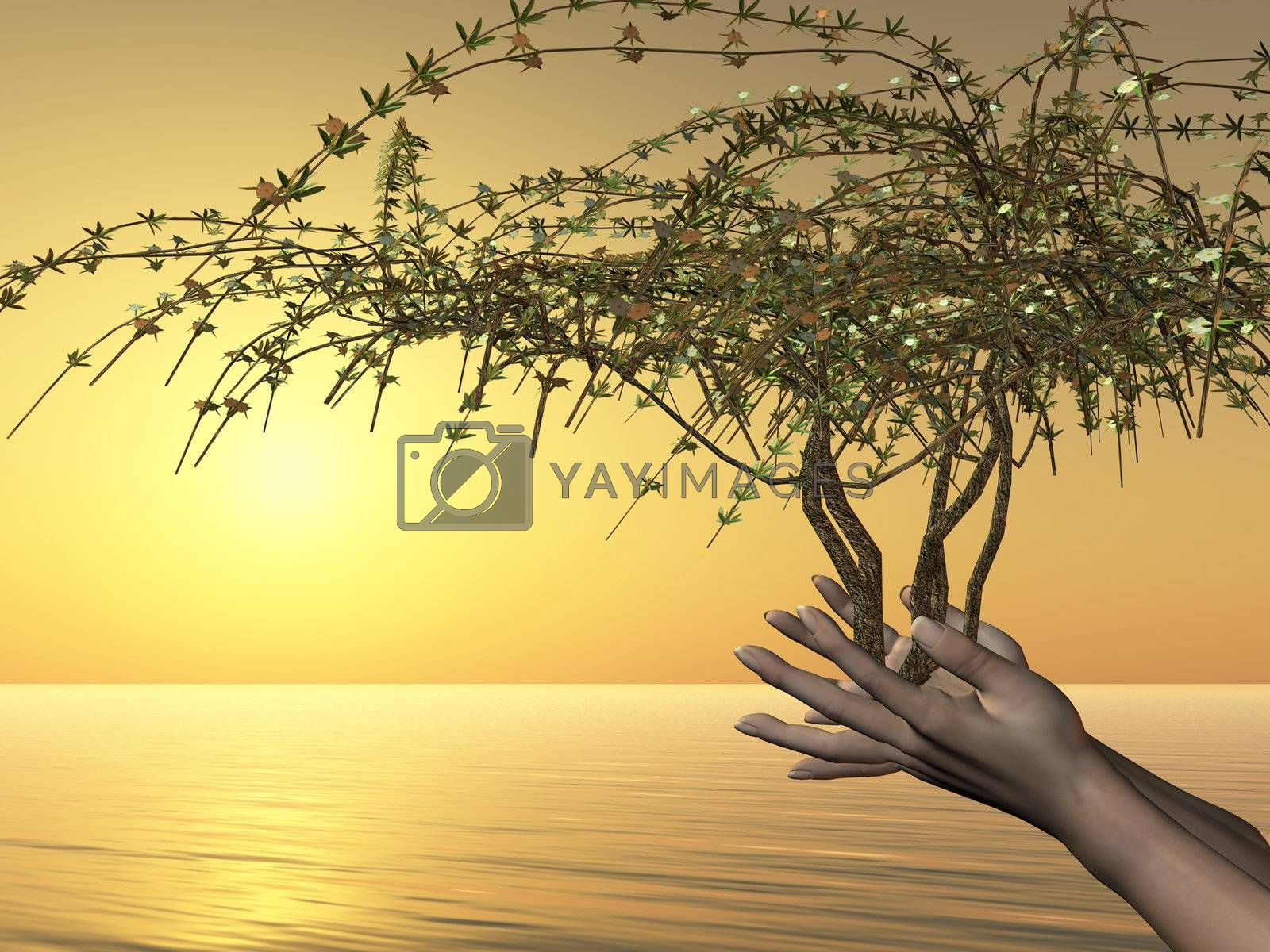 Human hands hold the gift of life in tree form.