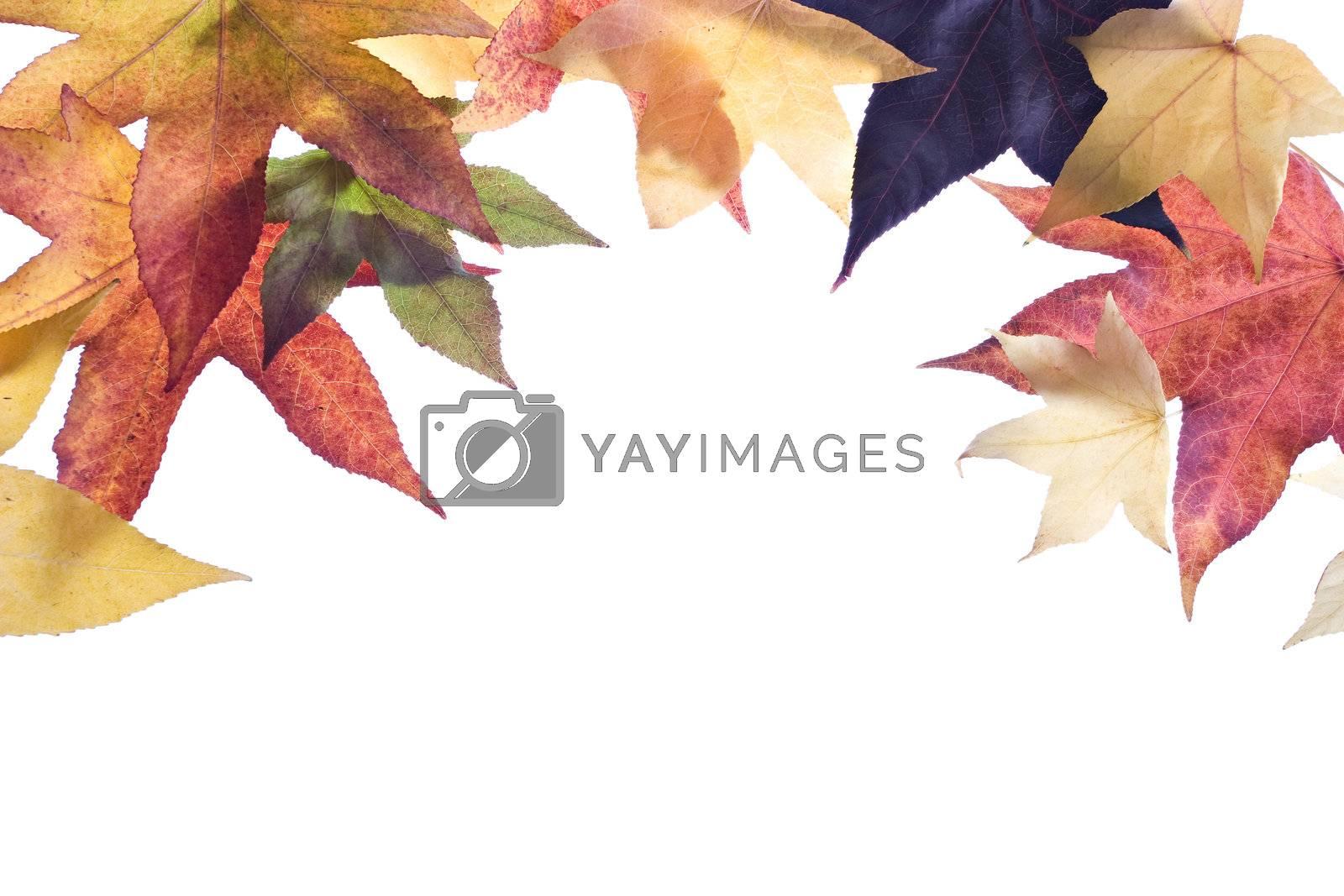 Autumn leaves frame/border over white background.