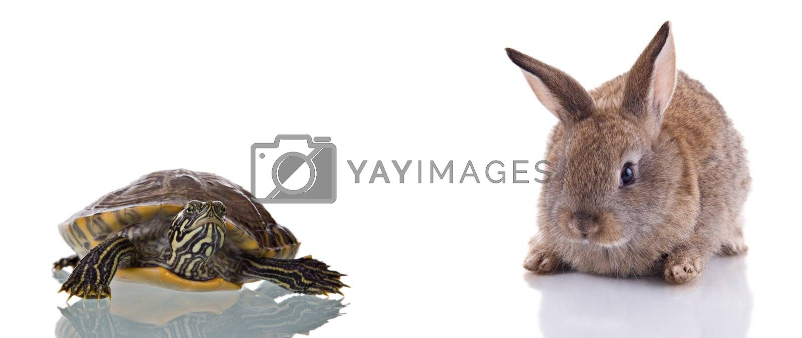 Cute Bunny and Turtle, isolated on white background. Concept: Competition