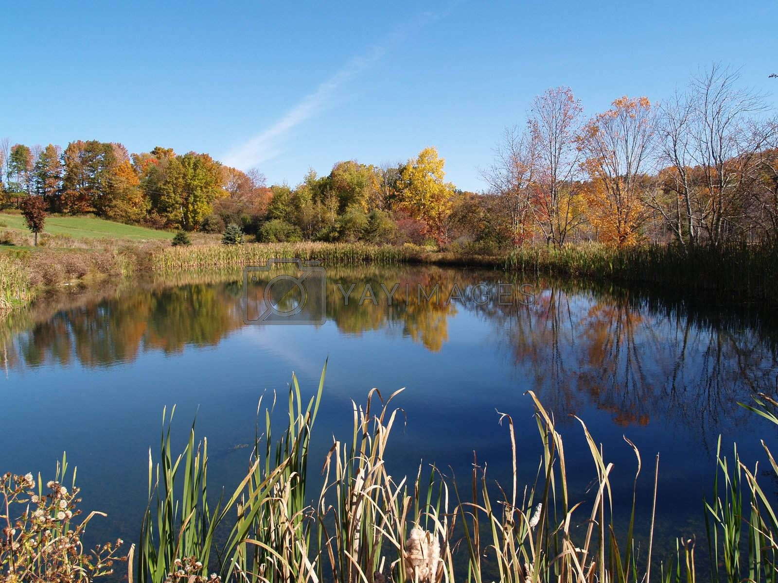 calm pond in the country
