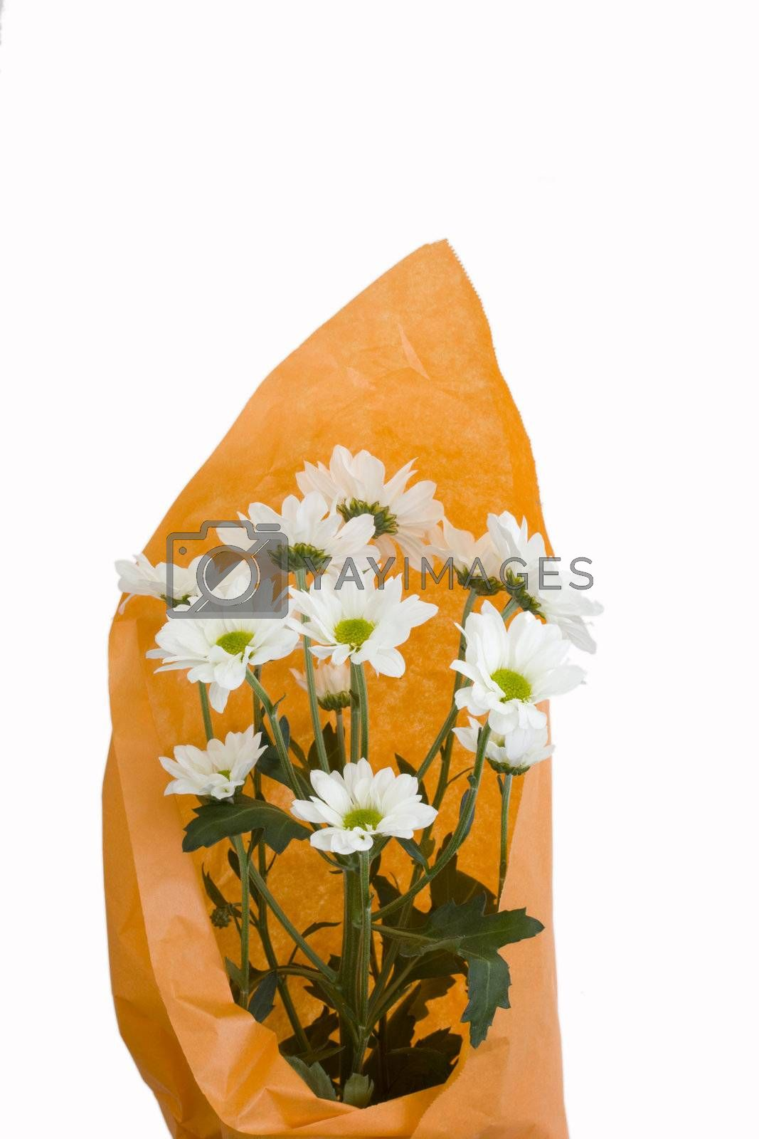 bouquet of white chrysanthemum in orange wrapping