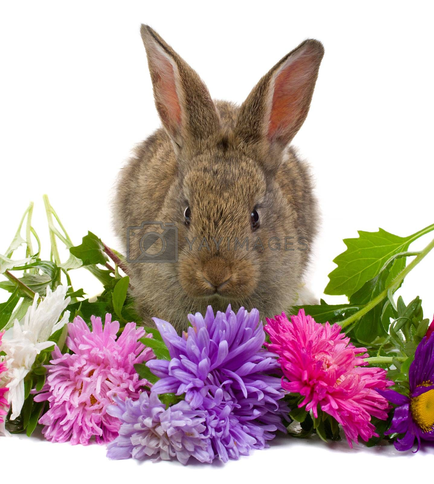 close-up bunny smelling flowers, isolated on white