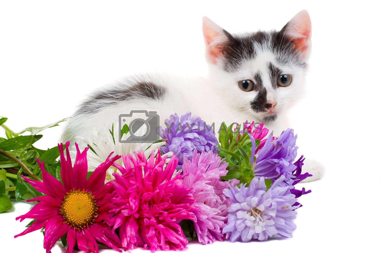 lying kitten with flowers, isolated on white