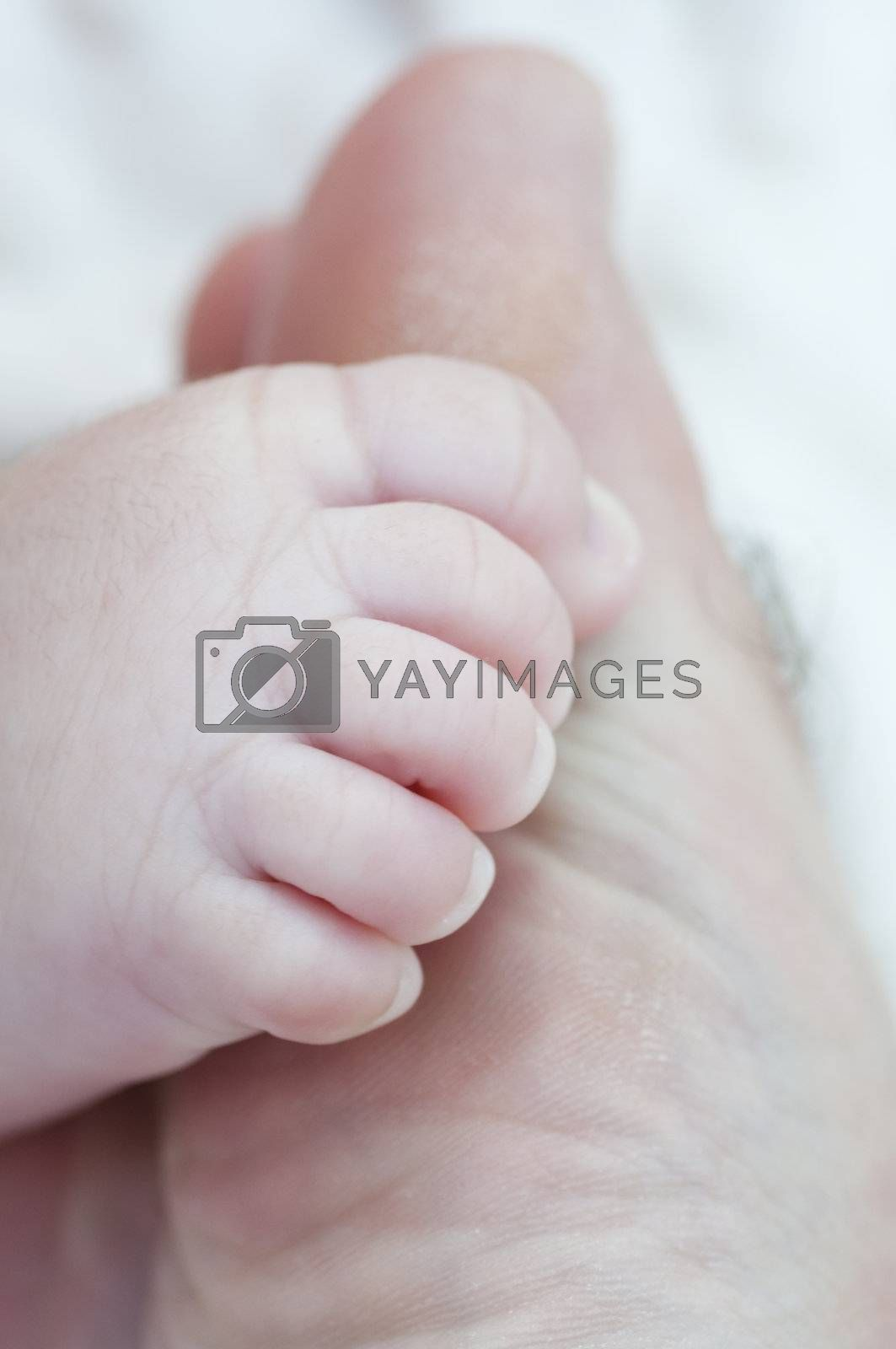 Picture of a new born foot.
