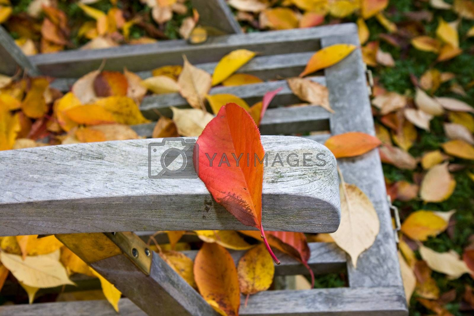 detail of a wooden deckchair covered with leaves in autumn