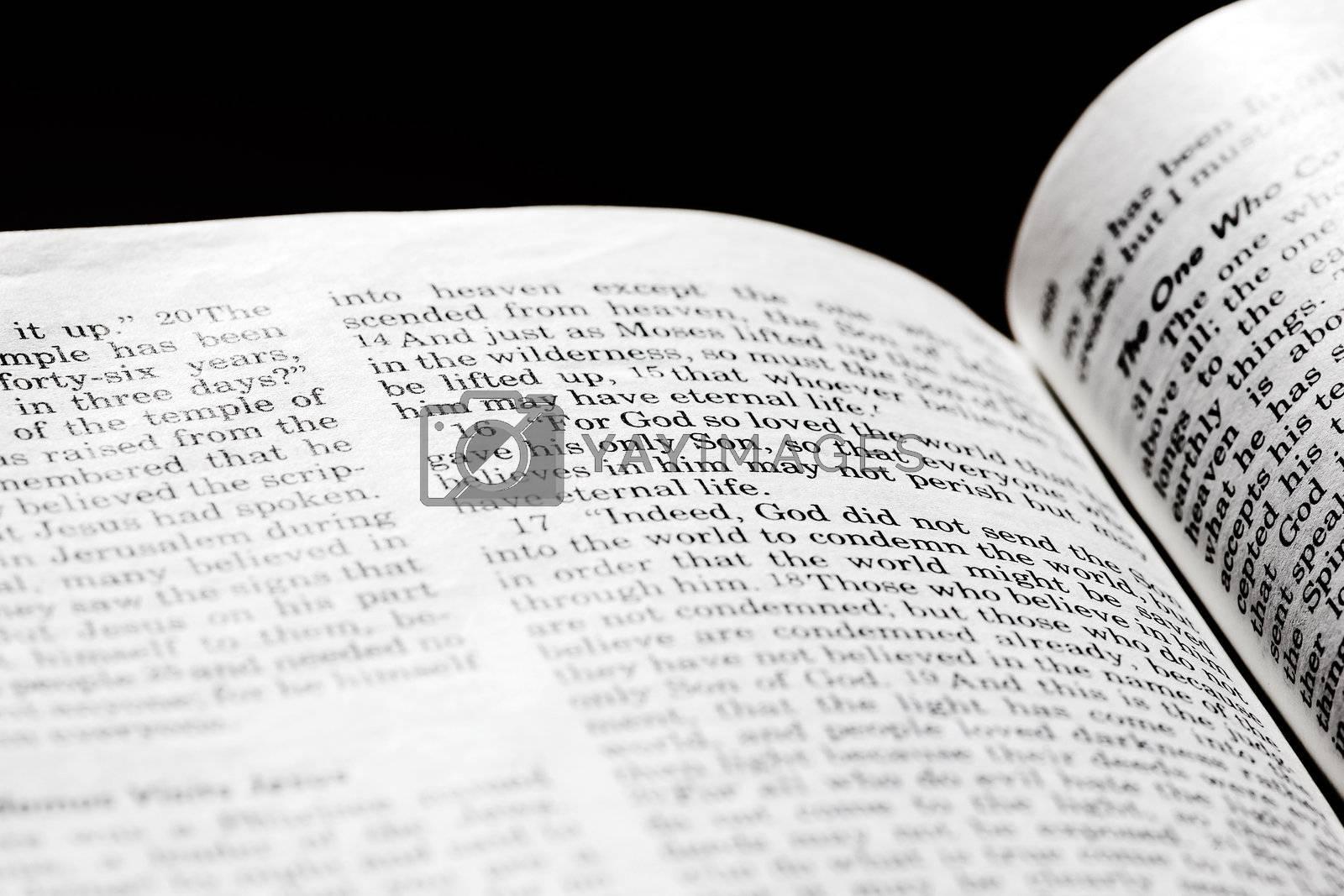 John 3:16 by leaf