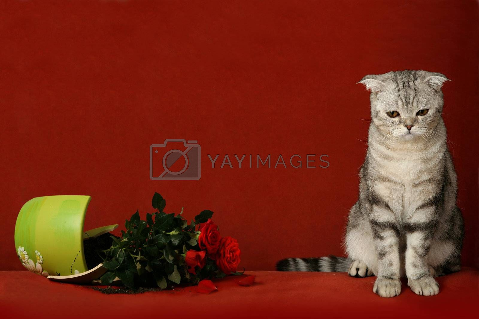 Accused cat and  broken pot of flowers by skutin