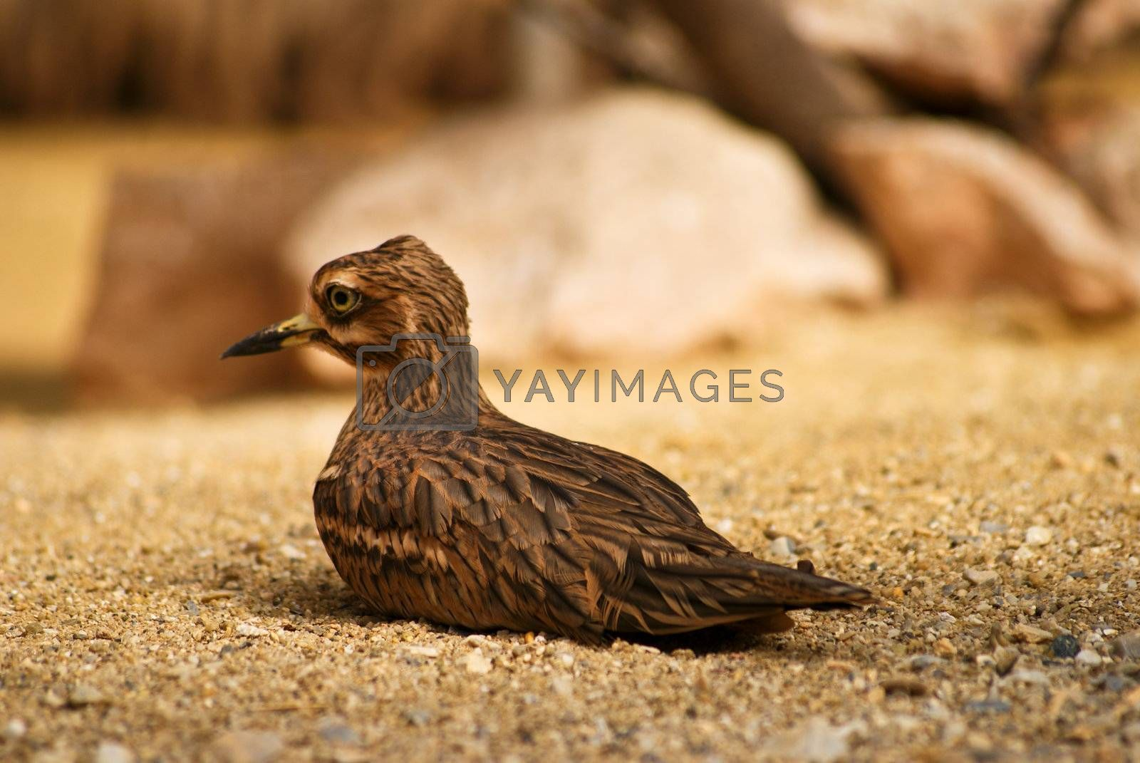 Bird on desert