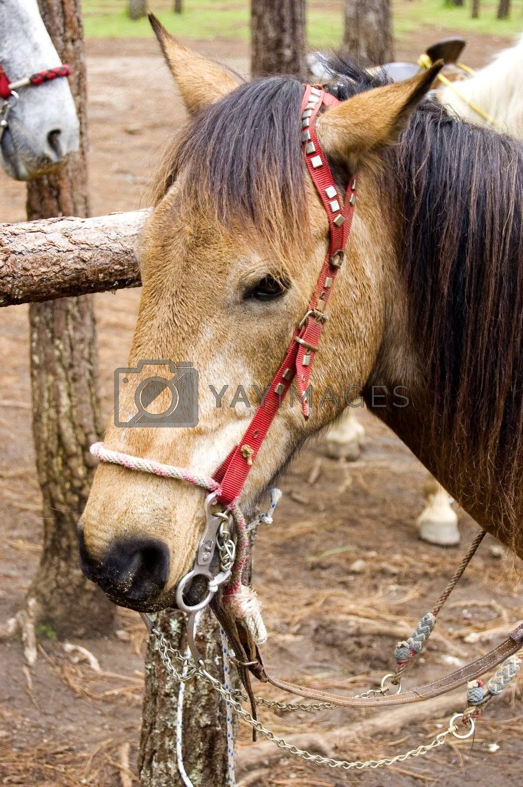 Brown Horse Head by jorgeinthewater