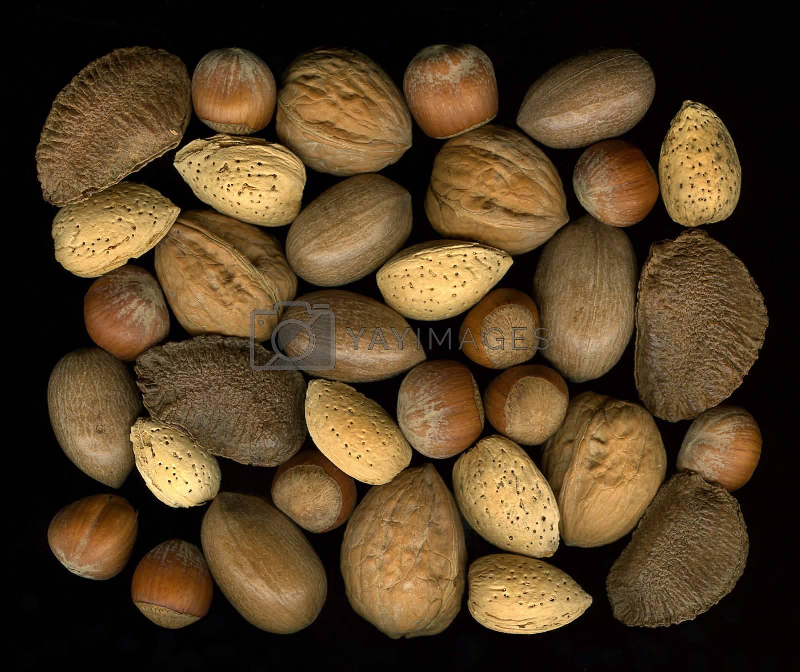 A collection of mix nuts in shells: walnut, hazelnut, pecan, almond, brazil on black background