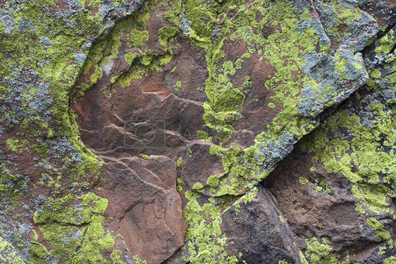 Sandstone rock with silver and green yellow lichen by PixelsAway