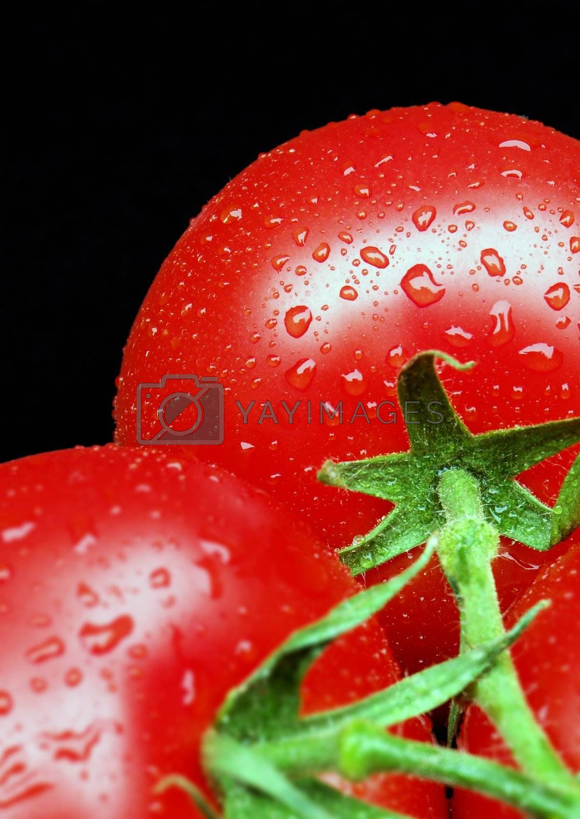 Tomatoes on Vine by massman