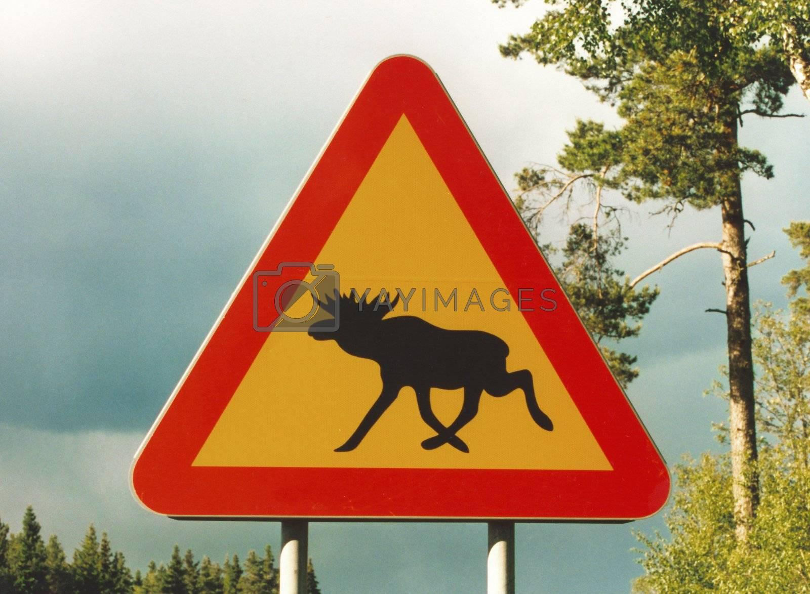 achtung elch | attention elk by fotofritz