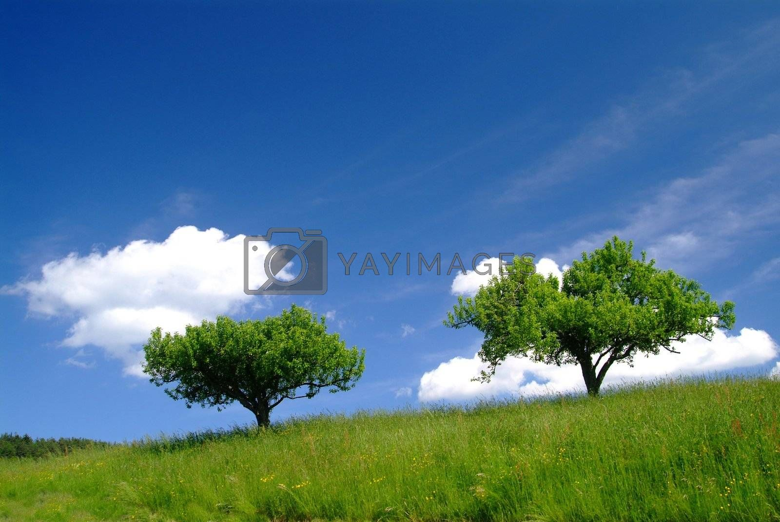 2 b�ume mit Himmel | 2 trees and sky by fotofritz