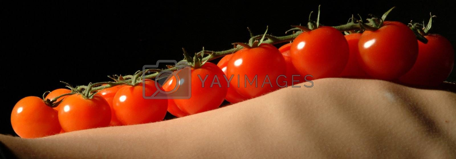 panicle tomatoes on ribs by fotofritz