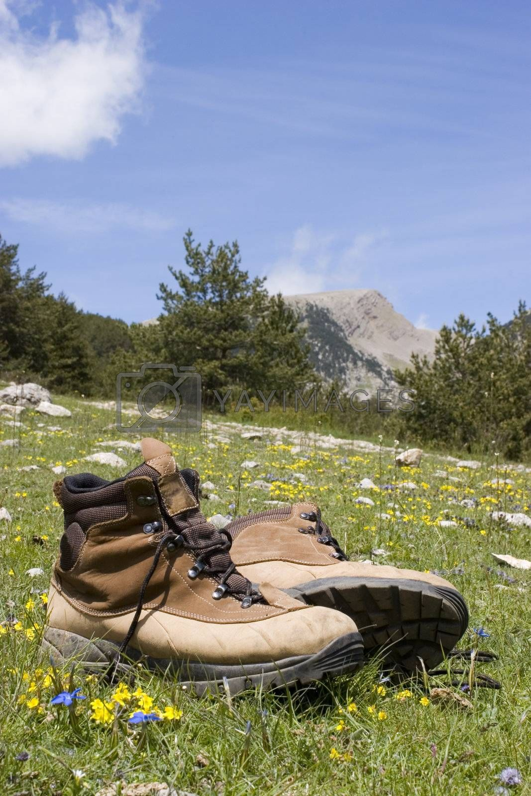 Alpine boots in a meadow with flowers in front of a mountain landscape