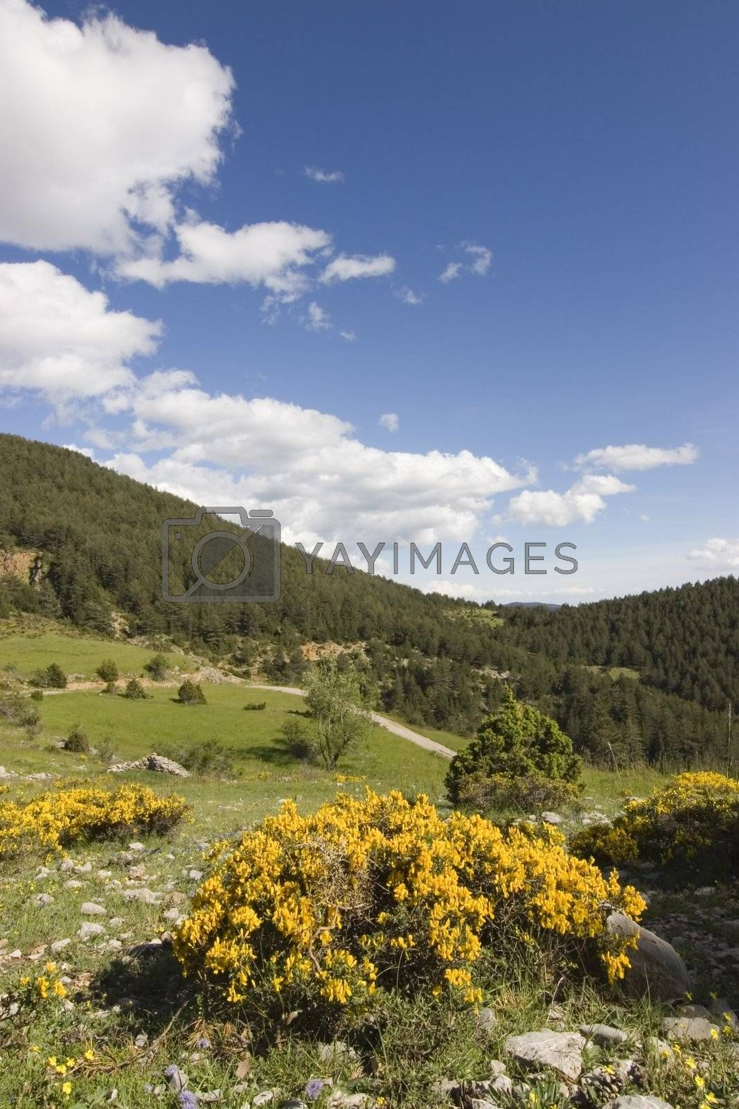Beautiful landscape in the mountains with blue summer sky and white clouds