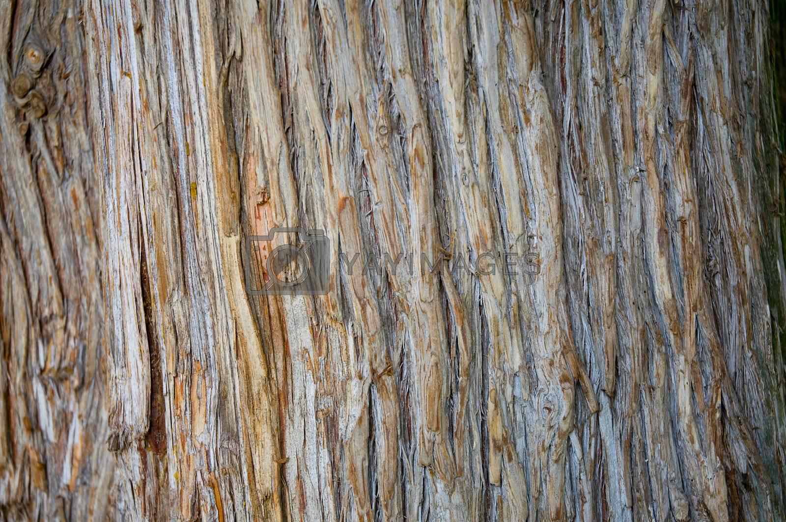 fir bark