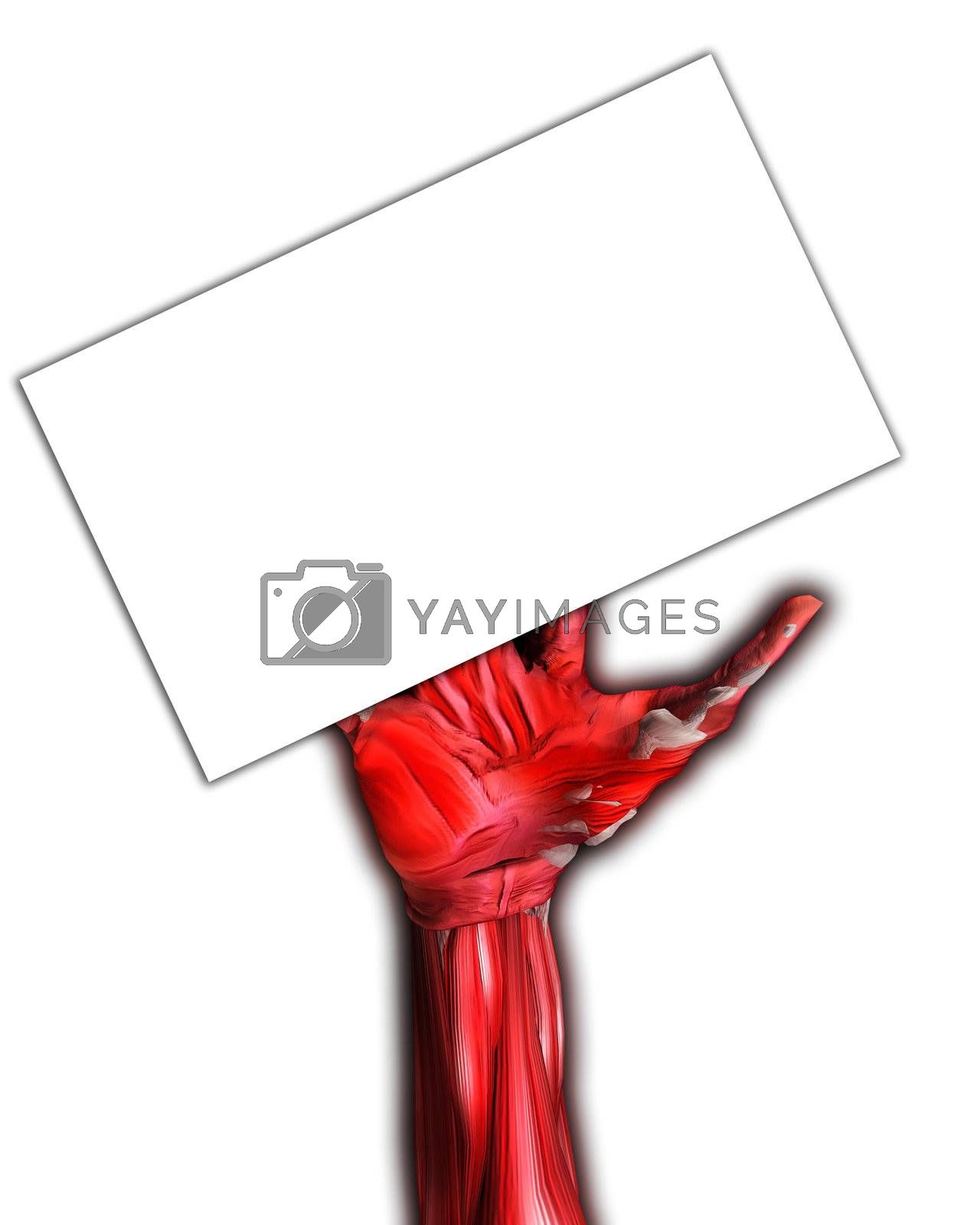 A muscle and bone arm for medical or Halloween concepts. Holding a blank customisable sign.