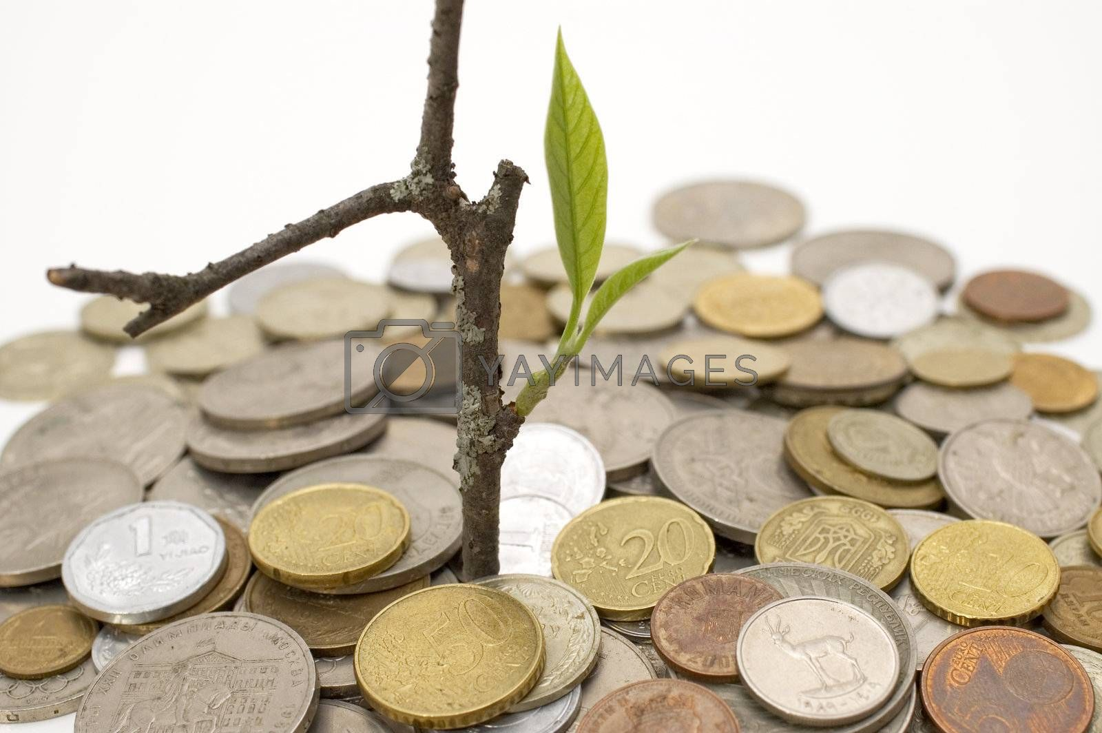 Coins and plant, isolated on white background.