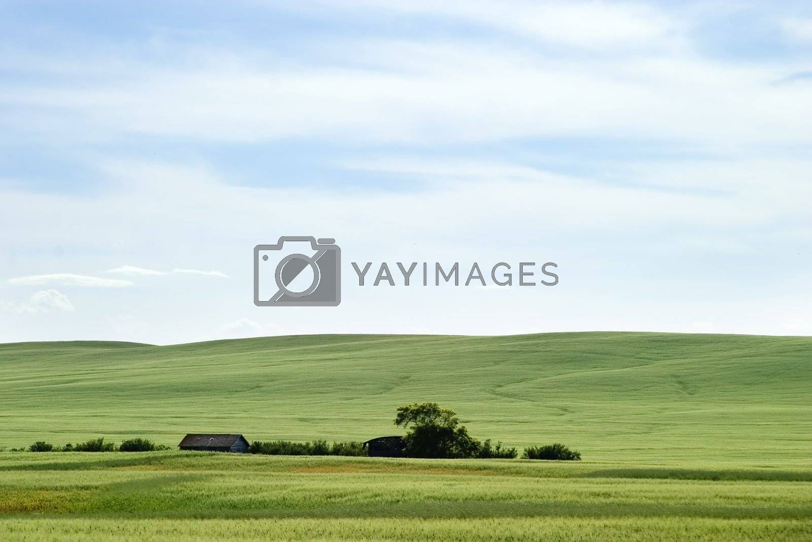 Prairie horizon in rural Saskatchewan.