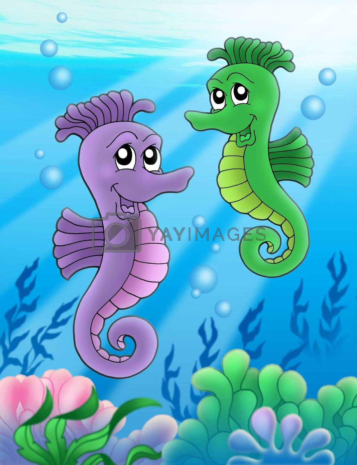Pair of sea horses - color illustration.