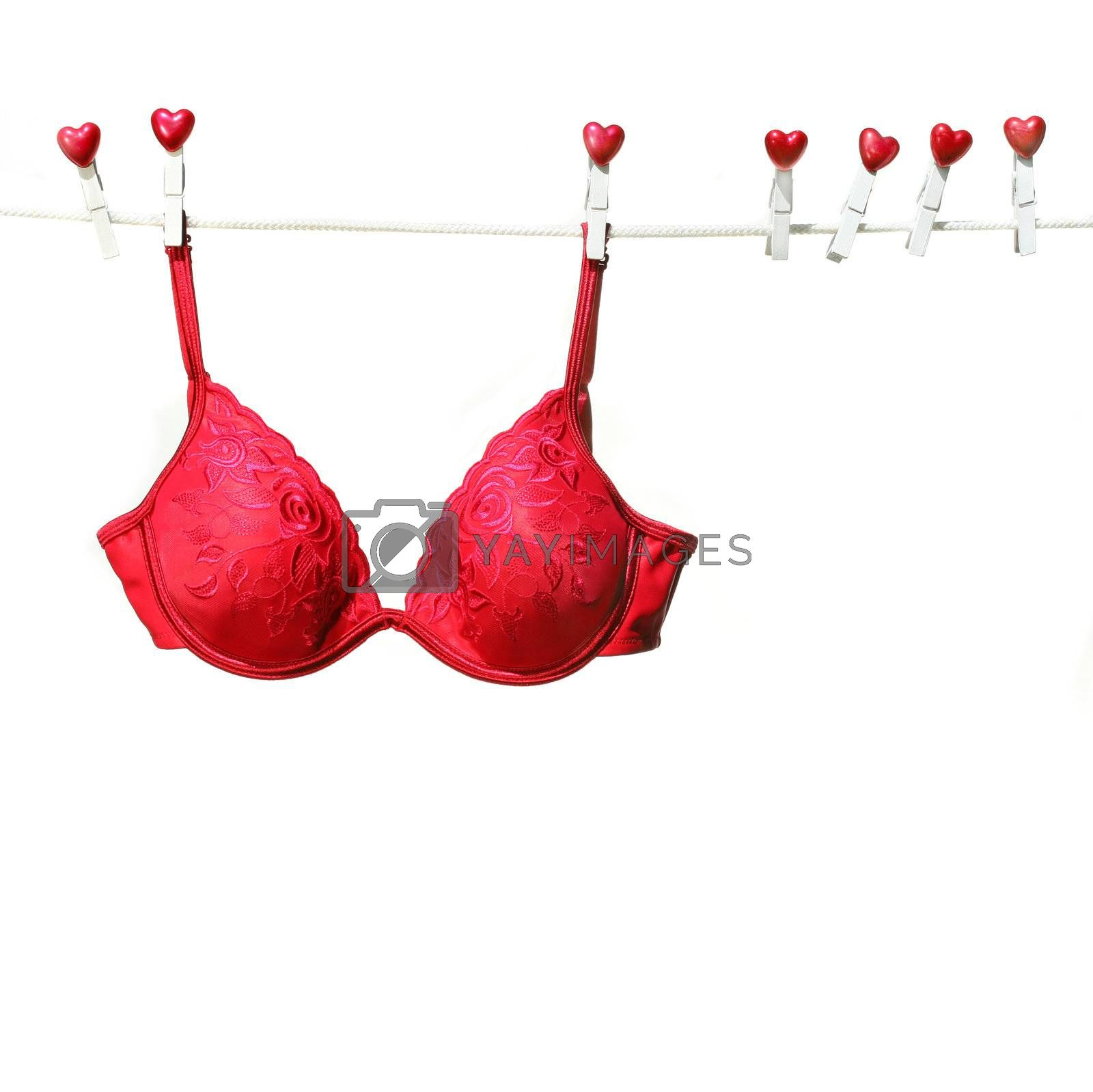 Fancy red bra hanging on clothesline with white background