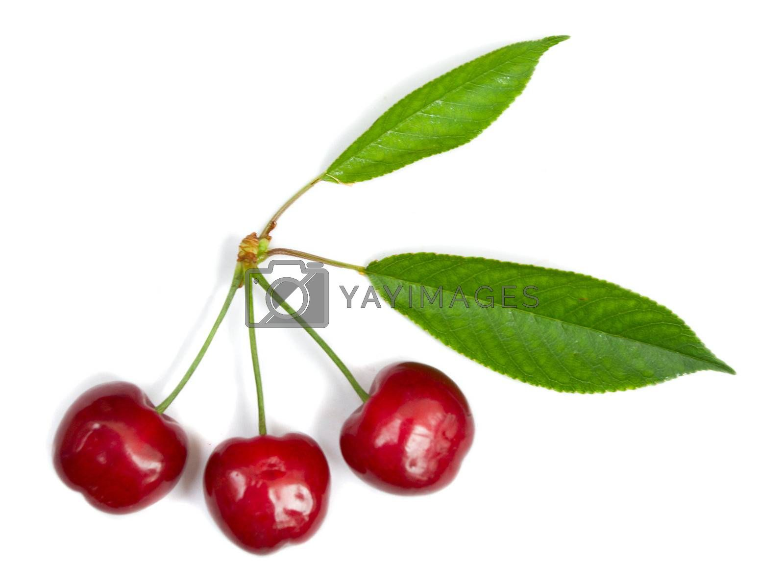 close-up three ripe cherries with leaves, isolated on white