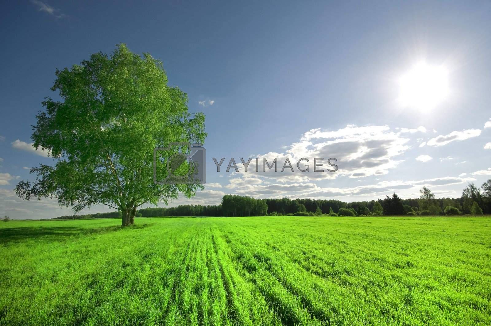 one green tree on the field and cloudy sky