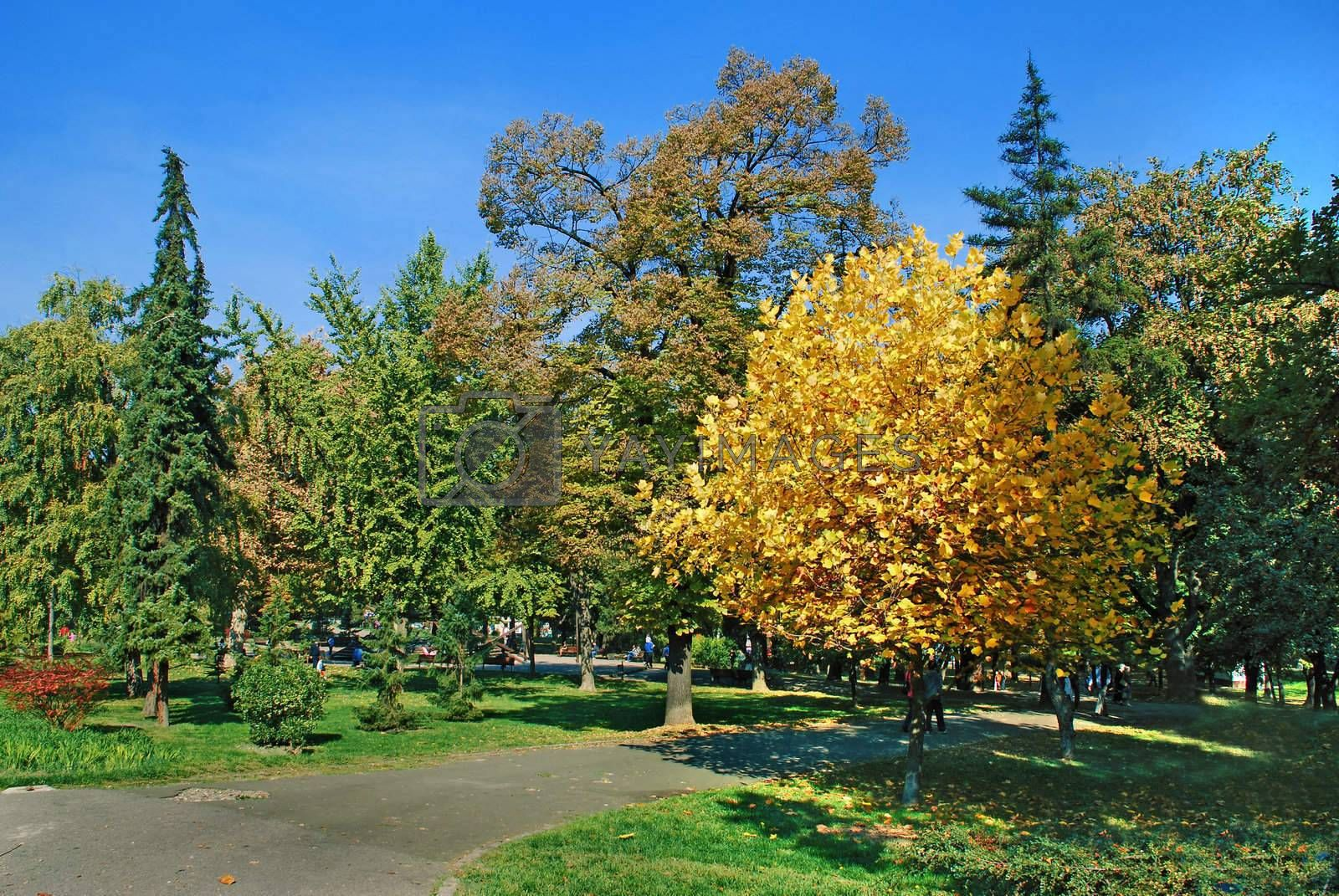 yellow and green trees in par over blue sky