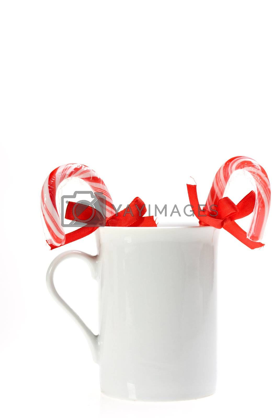 sugar canes in a white cup isolated