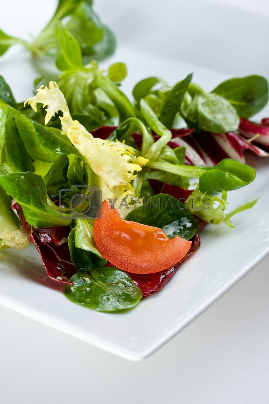 detail of a mixed salad on a white plate