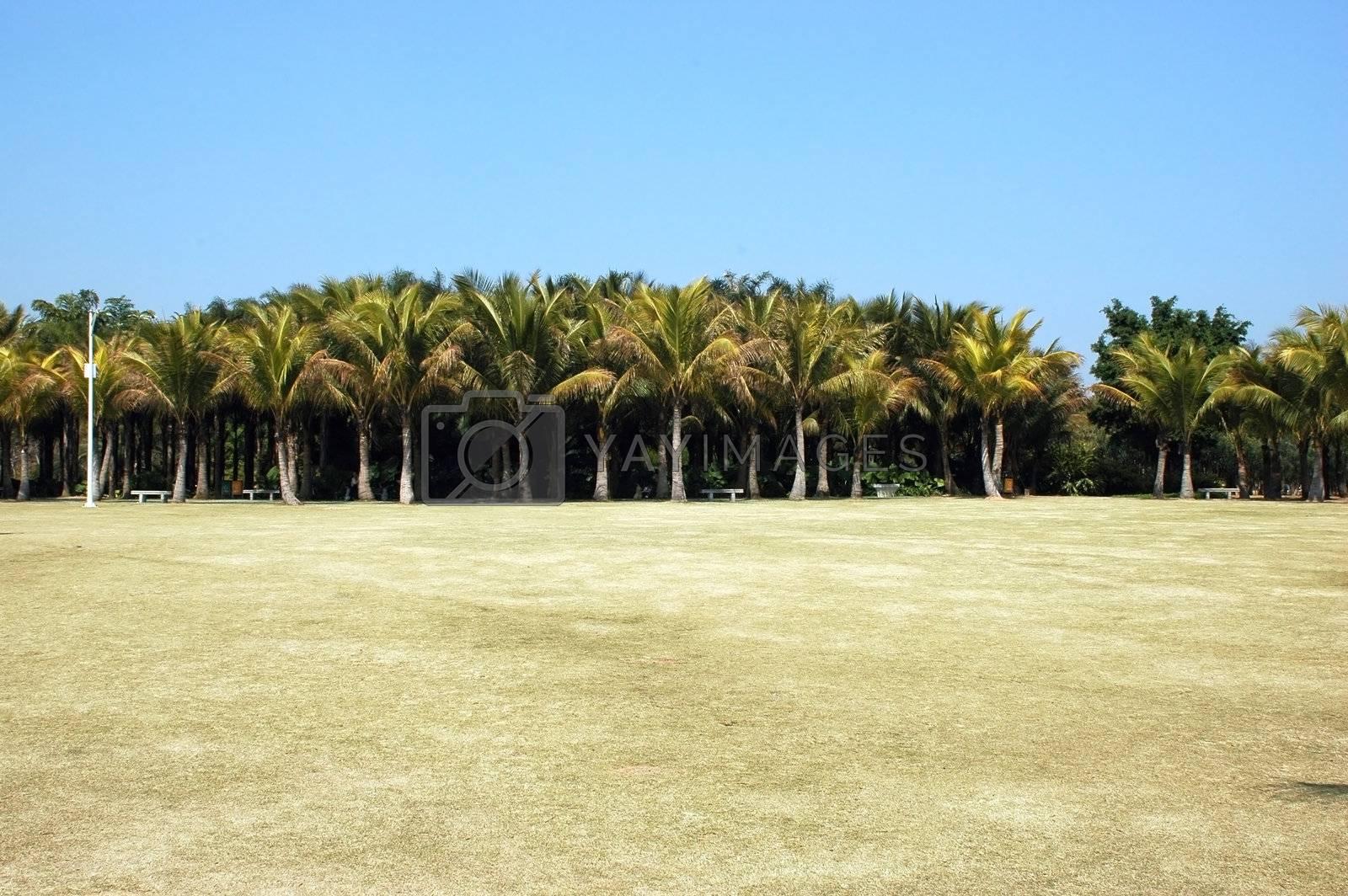 Palm's tree park by bartekchiny