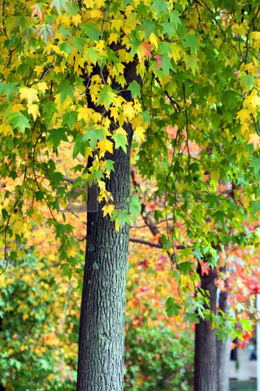 Autumn landscape by jpcasais