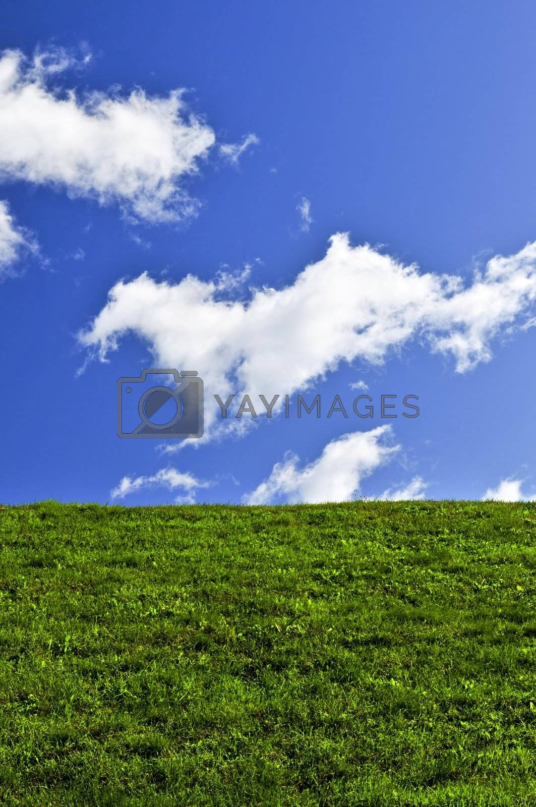 Blue sky and green field by elenathewise