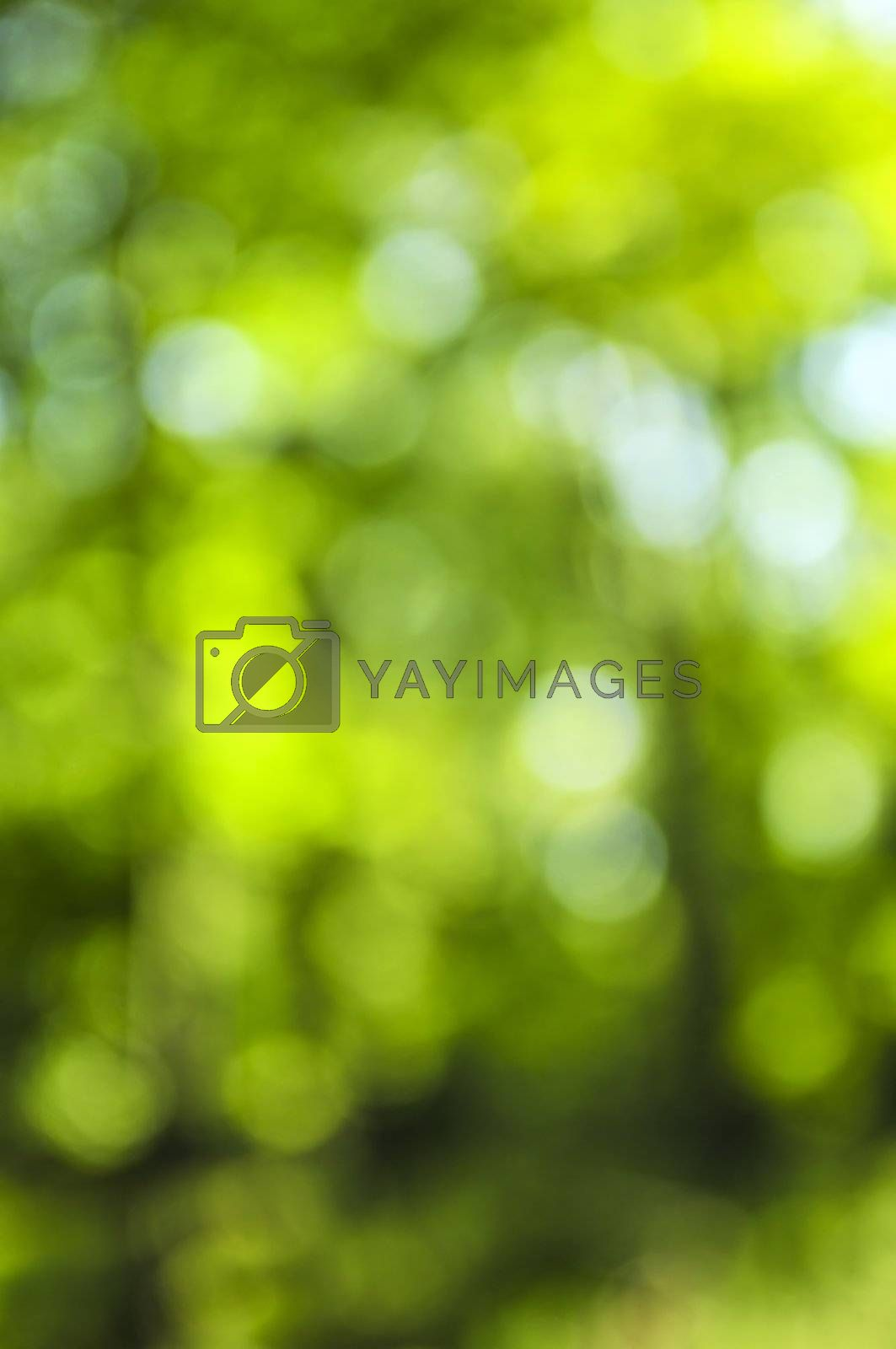 Green background by elenathewise