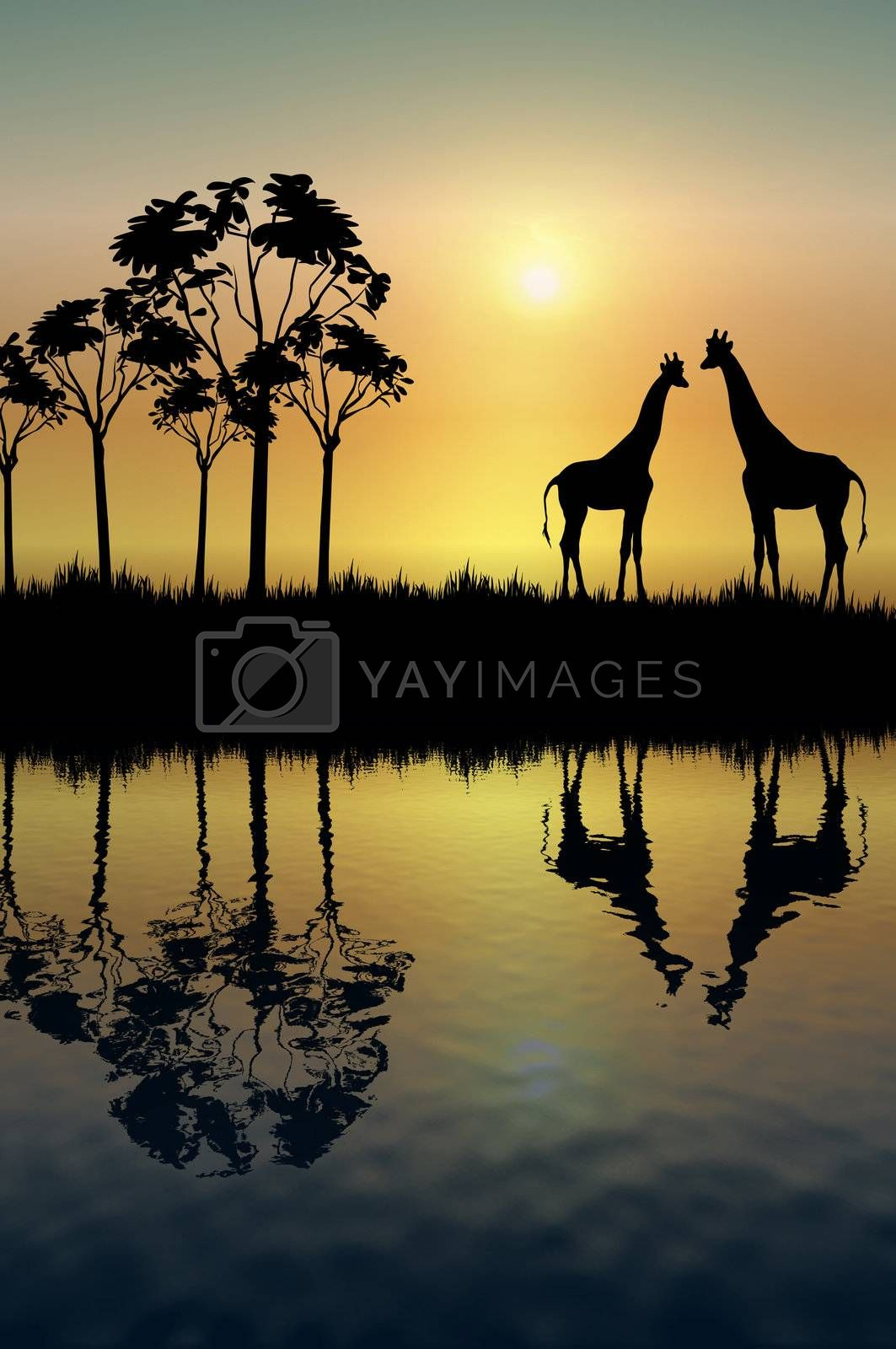 Giraffe Reflection by srnicholl