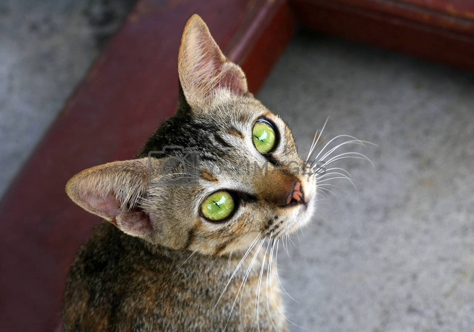 Cat with green eyes by friday